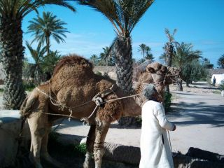 Reviews- Djerba Explore Park