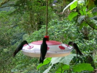 Reviews- Humming Bird Station Forest