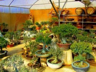 bonsai gartencenter psakoudia in psakoudia holidaycheck. Black Bedroom Furniture Sets. Home Design Ideas