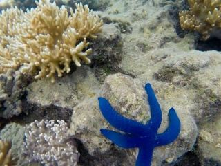 Reviews- Snorkelling  Beqa Island
