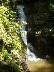 Avis - Cascades Thalang