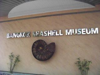Reviews- Seashells Museum
