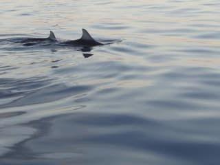 Recensioni - Nuotare con i delfini