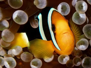 Reviews- Diving North-Male Atoll