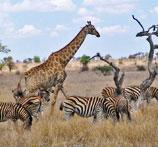 Urlaub Afrika